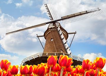 Tulips & Windmills