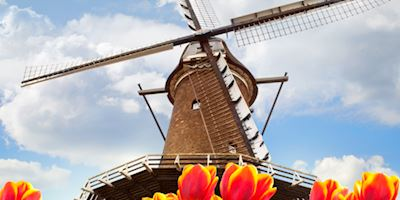 A windmill in Holland against a blue sky with bright orange tulips in the foreground.